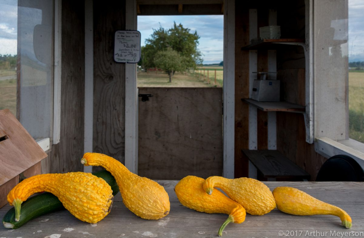 Squash, Washington