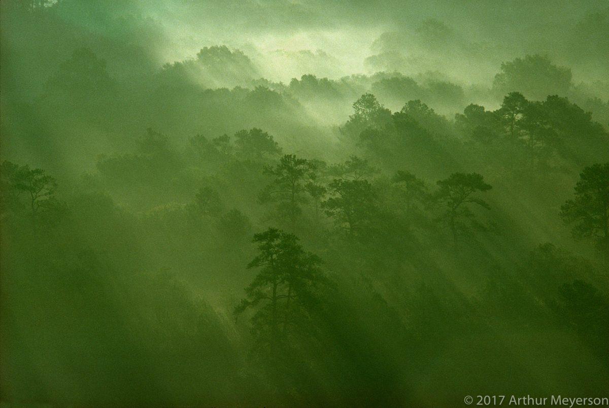 Forest Mist, Texas 1977