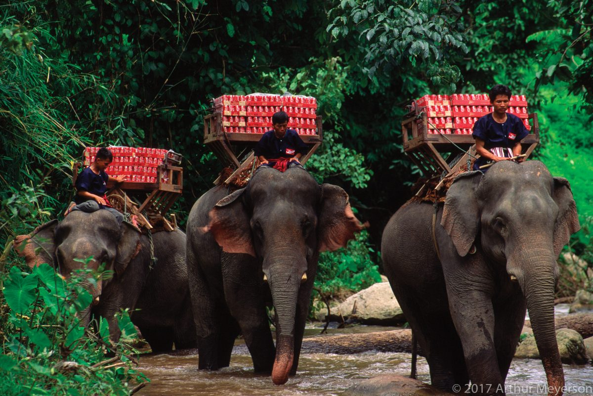 Elephant Delivery, Thailand