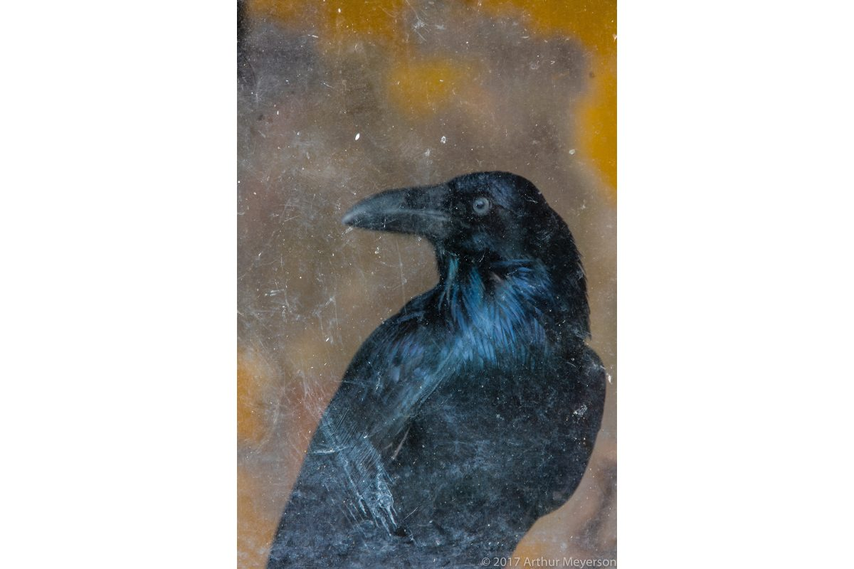 Raven, Alcocer