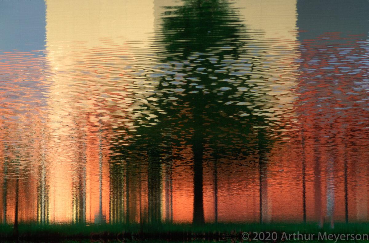 Tree, Reflection Texas