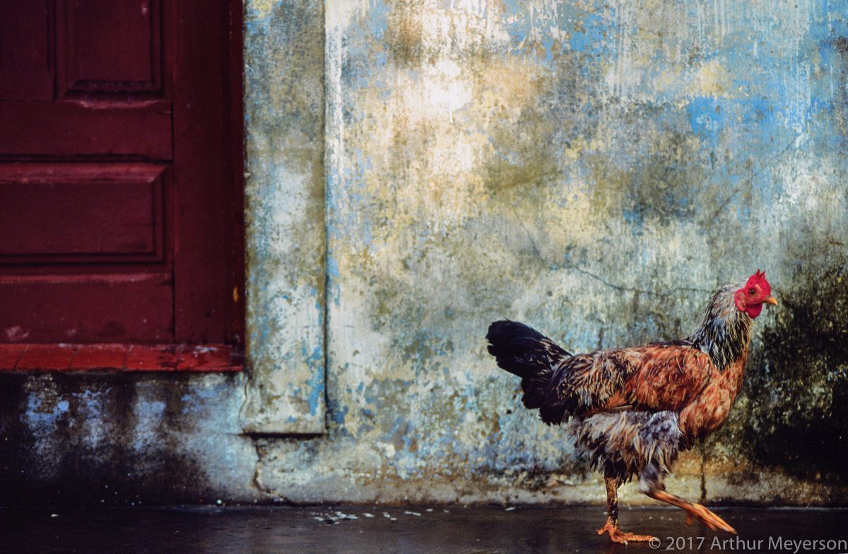 Chicken, Brazil, 1992 (MFAH Collection)