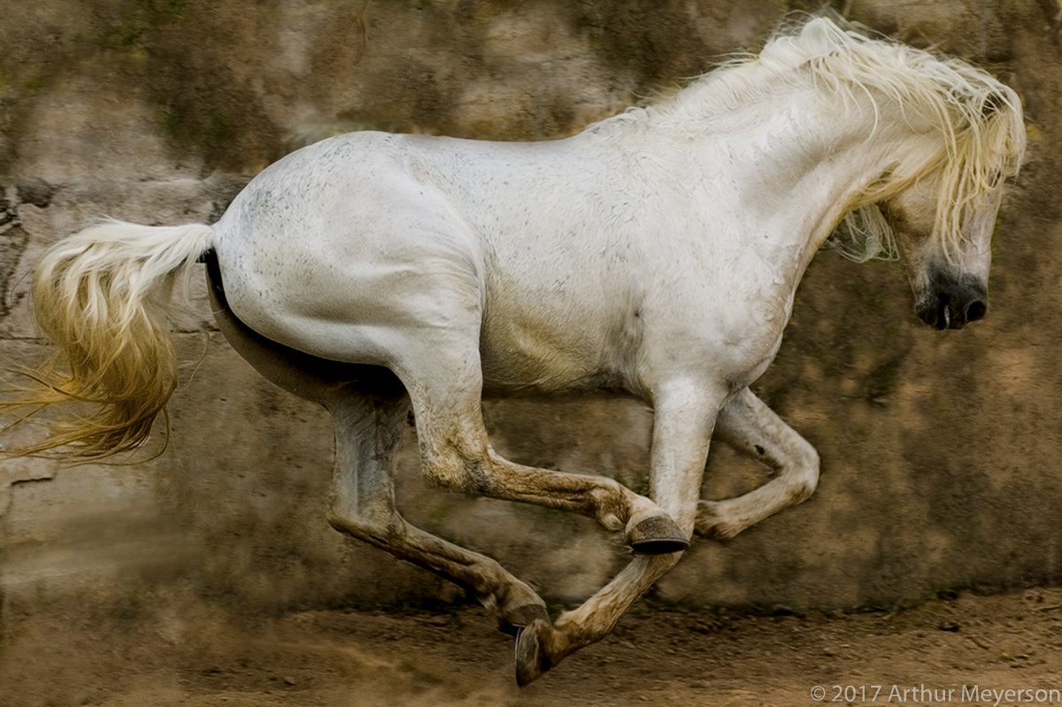 White Stallion, Mexico, 2004 (MFAH Collection)