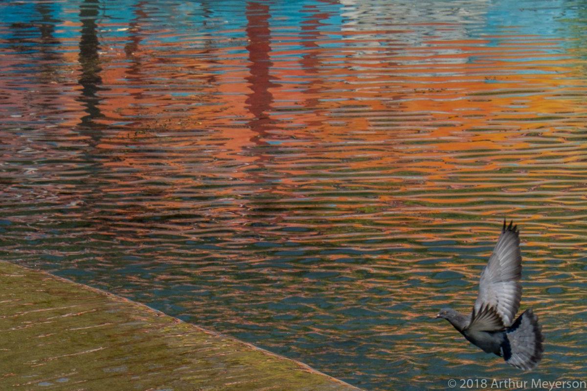 Reflection, Tomar