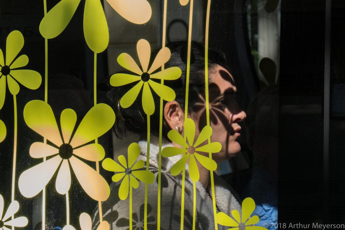 Flowers, Avignon