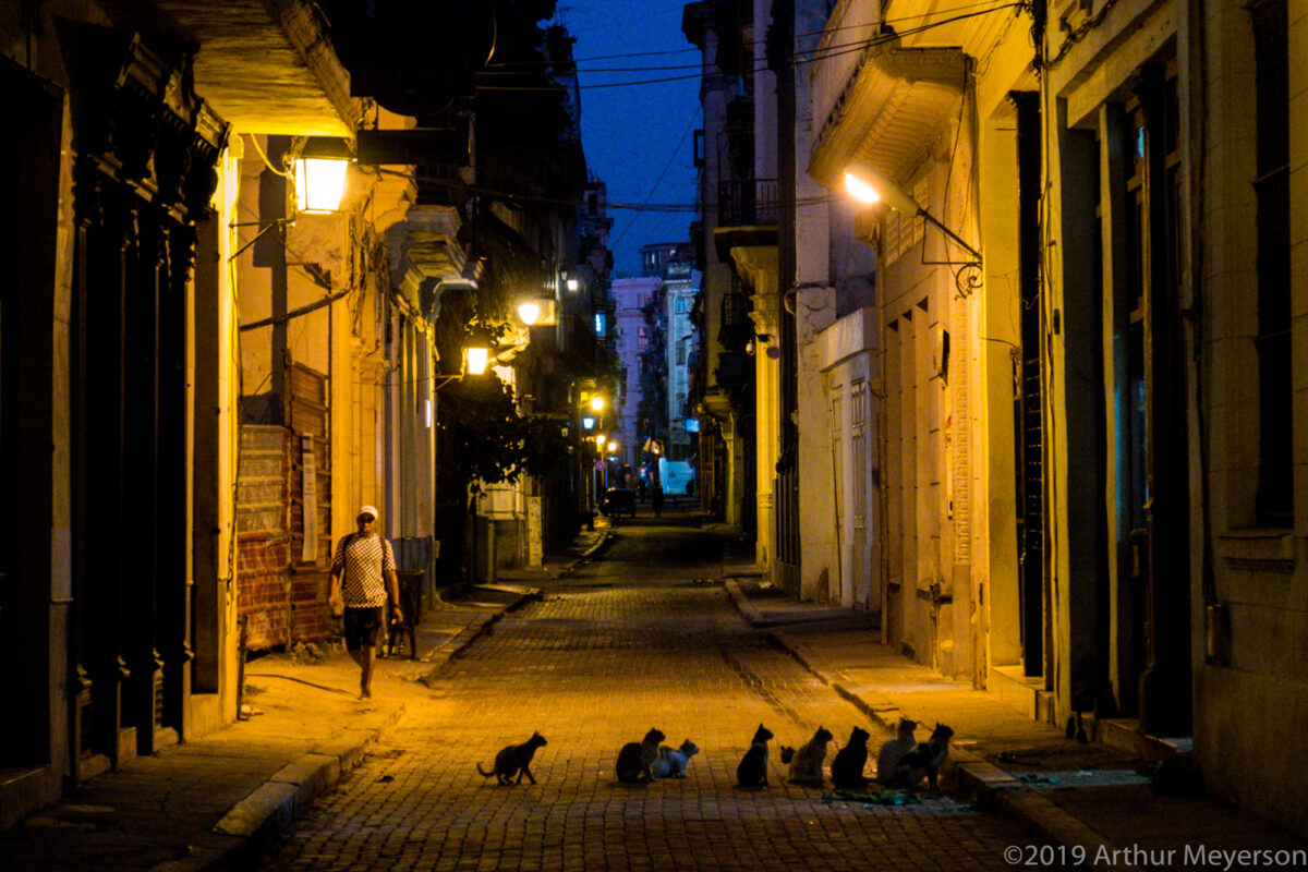 Cat line-up, Havana