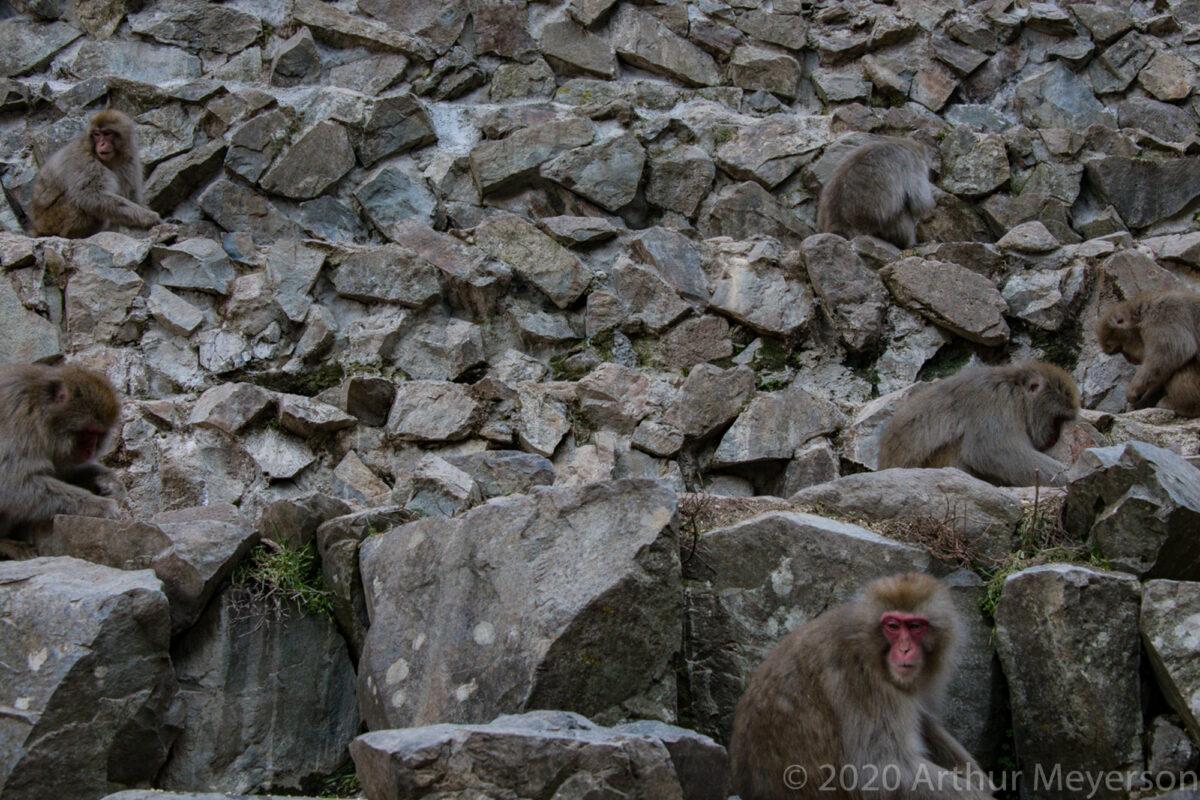 6 Snow Monkeys